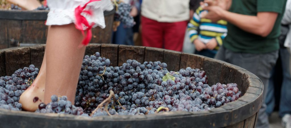 Feet stomping grapes in a barrel at a wine festival.